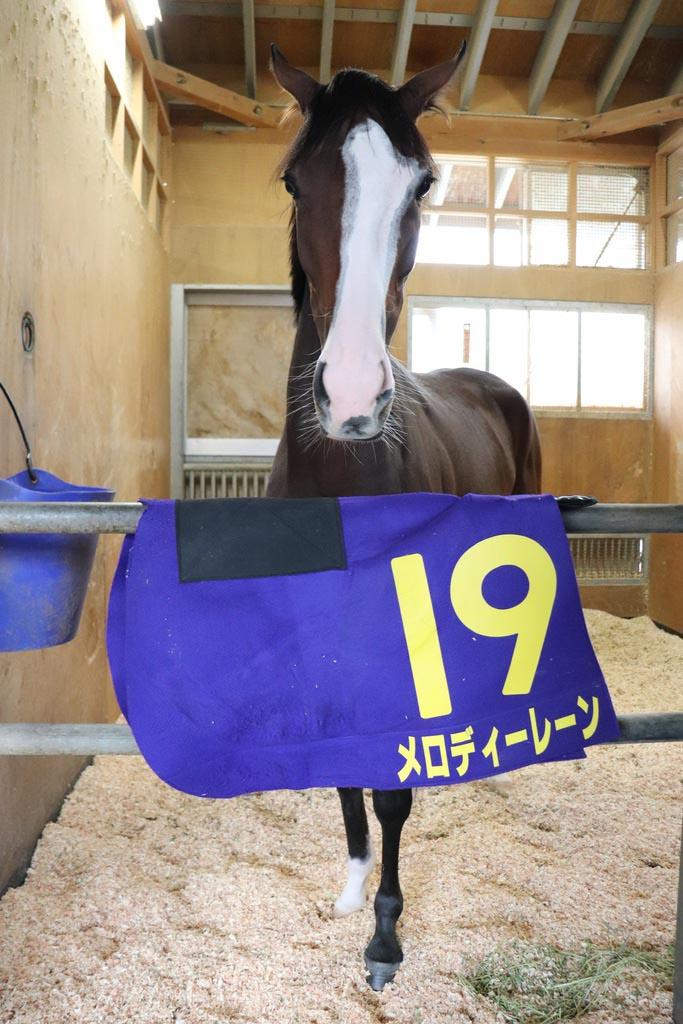 菊花賞で5着に健闘したメロディーレーン。栗東トレセンに入厩当初は、まだ300キロ台後半はあったそうですが、森田調教師の「これだけの牡馬を相手によく伸びた」の言葉どおり、今回も頑張りましたね。今後は、暫く休養へ。また元気な姿でターフに戻って来て欲しいものですね。