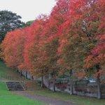 Image for the Tweet beginning: Autumn @StarbankPark