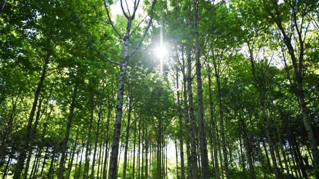 ¿Es la reforestación masiva realmente efectiva para el planeta?
