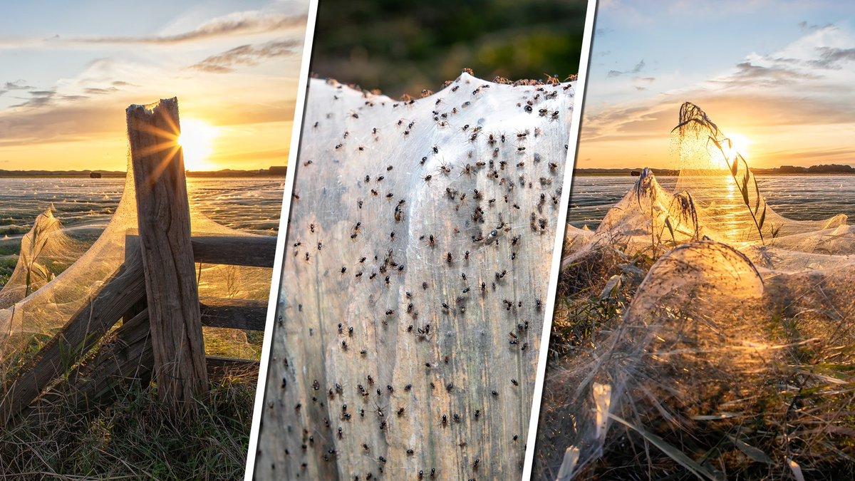 test Twitter Media - Sneeuw in oktober? Texel bedekt met witte deken van spinnenwebben https://t.co/fECvgy9JCQ https://t.co/LxeI6KgvRo
