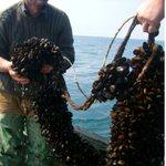 Image for the Tweet beginning: Interested in open ocean #aquaculture?
