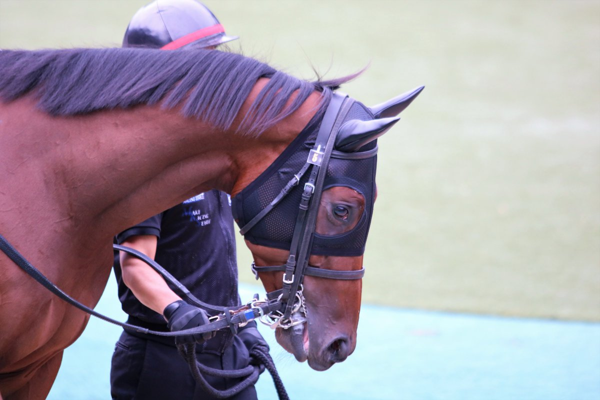2019.10.21 東京競馬場 パドック 福永祐一騎手を初めて見れました。 スミヨン騎手、このレース7番人気で勝ちました。