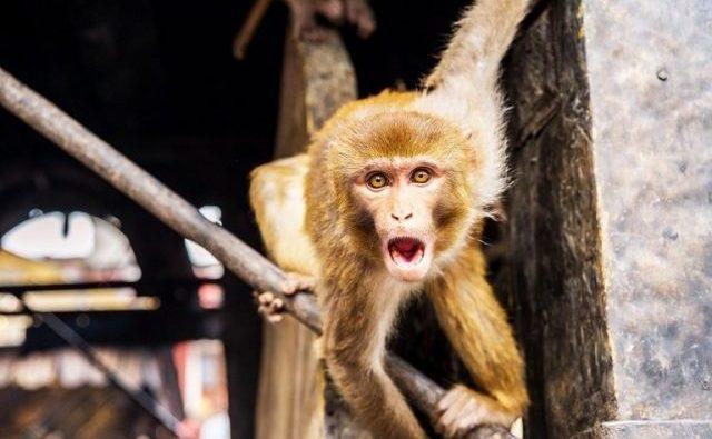 La saliva es uno de los factores diferenciadores entre humanos y simios