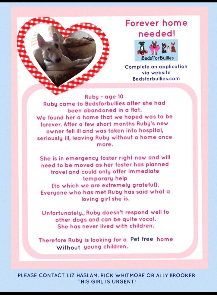 Ruby!❤ Please download an application form from our website:bedsforbullies.com If you could help this gorgeous girl. #TeamZay #AdoptDontShop #MondayMotivation