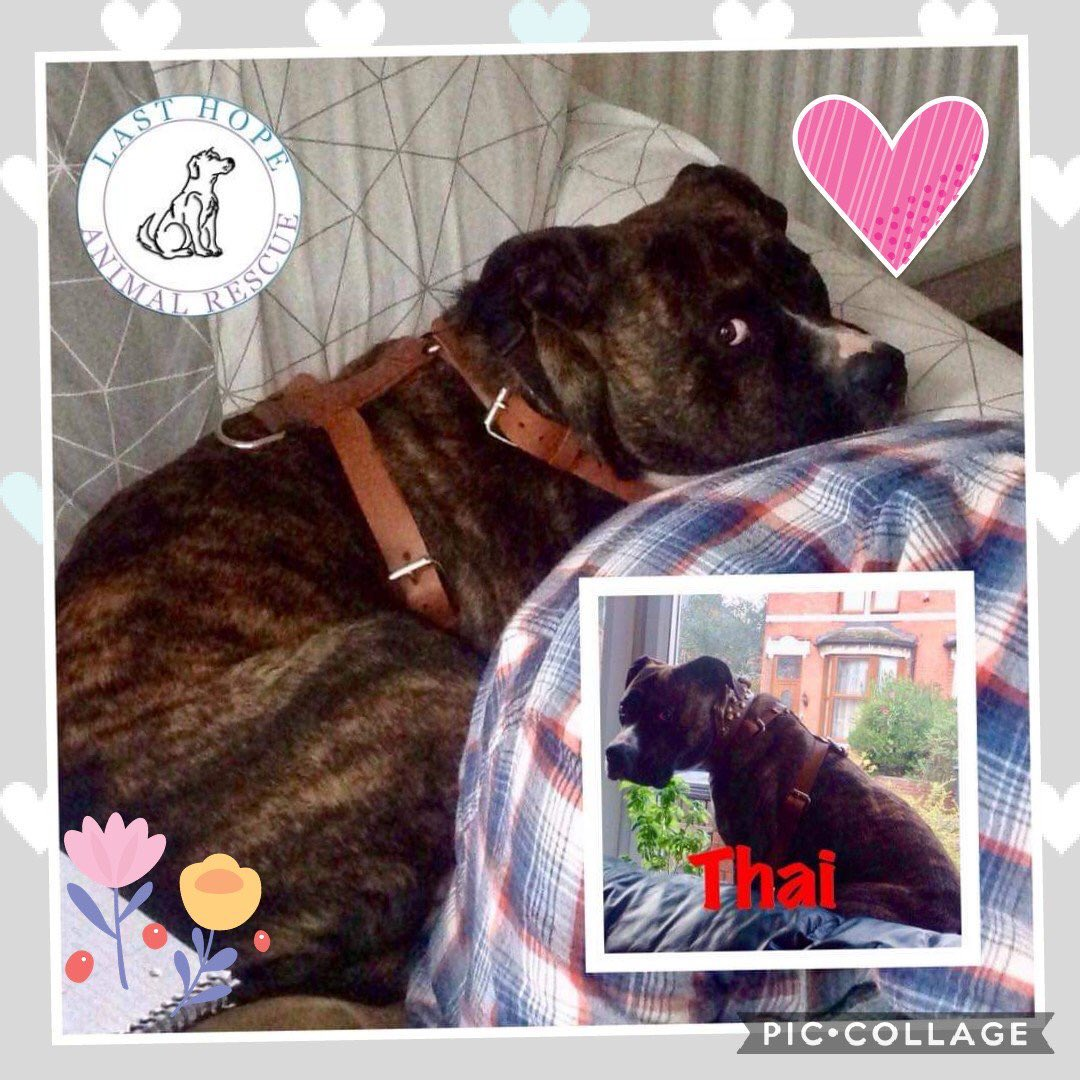 #k9hour #super duper handsome boy ready and waiting on a super duper home #Thai #TeamZay #itsallaboutthedogs #Letshearitfortheboys @lasthopeanimale