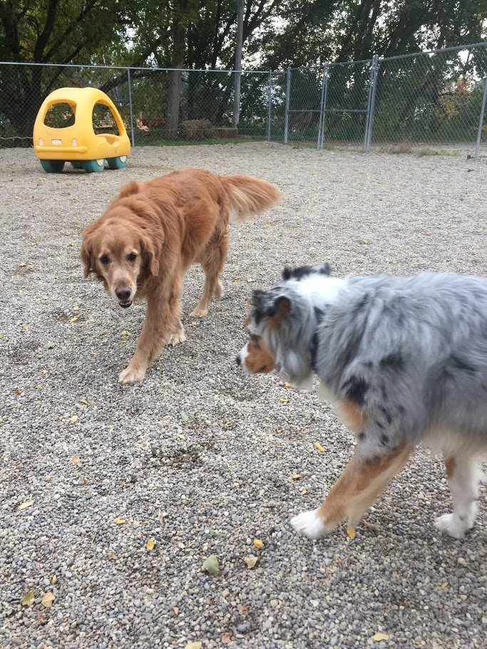 Rosie and Fergus stroll around together!