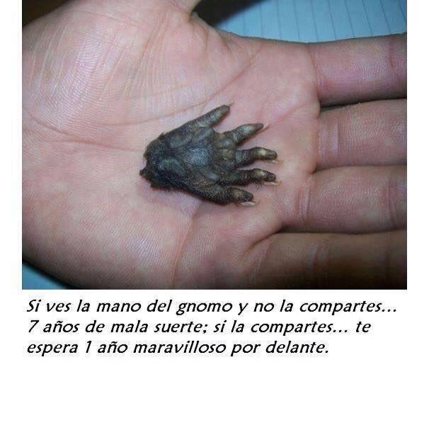 @acristofalo's photo on Cane