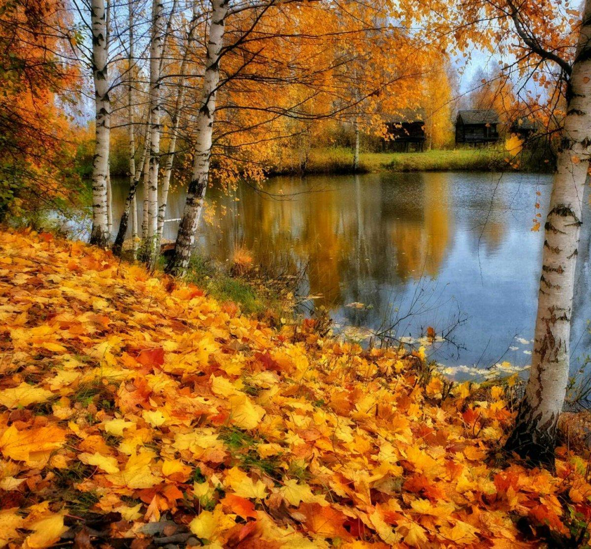 разделе все картинки золотая осень только