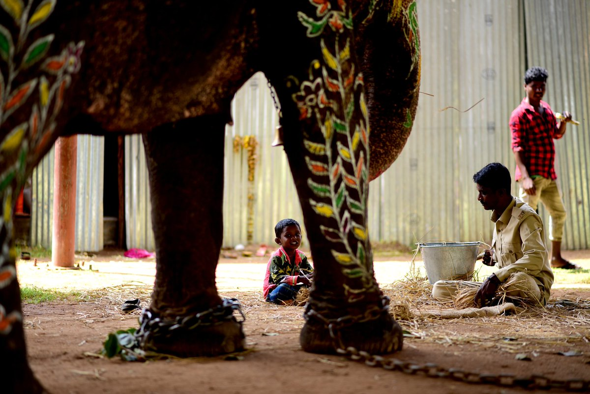 throwback ! My View of Dasara 2019-7 #dasara2019 #MysuruDasara2019 #mysorediaries #mysuru #dasara #tredition #indianfestivals #myviewofmysurudasara #dasaraelephants #elephant #dasarajumbos @MysuruMemes @MysuruDasara @mysuruonlinepic.twitter.com/yfftqLHWv5 – at Mysore Palace