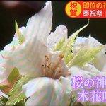 「即位の礼」でのまたの奇跡、静岡浅間神社で桜が咲く!