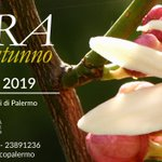 Image for the Tweet beginning: 🌸 Zagara d'Autunno 2019 🌿  All'Orto