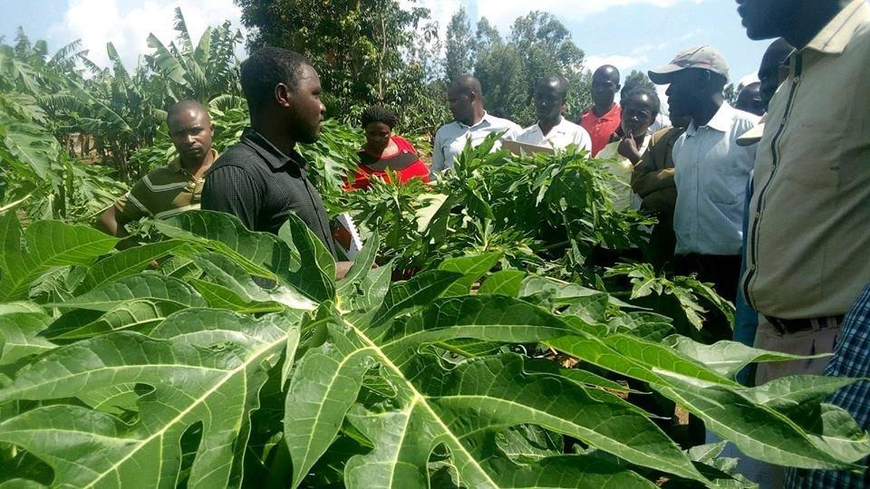 Poor coffee prices push Nyamira farmers to pawpaw farming>https://t.co/vYo72ONKjJ https://t.co/HjJ6fdyVtC