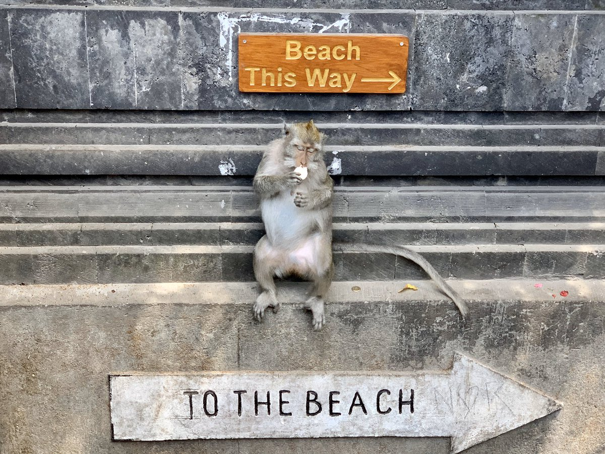 This monkey was so helpful today, directing us down to the beach. 🐒@SMulhollandCEng