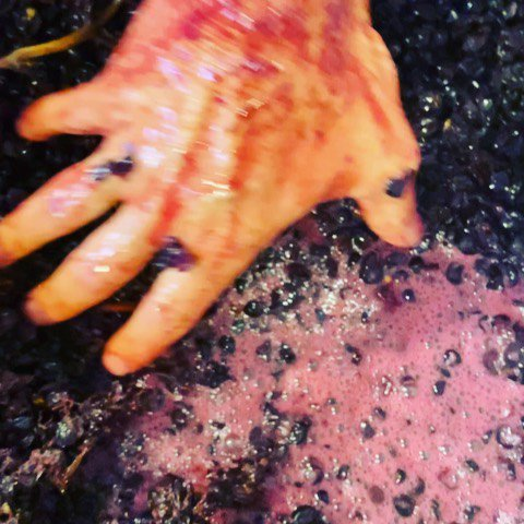 Last hand press down of the season for us on our La Chenaie Vineyard #pinotnoir #selectionmassale.  I will miss smelling this amazing perfume every day.  #Harvest2019 #OregonPinotNoir https://www.instagram.com/p/B37mtNnBI3-/ pic.twitter.com/PvA6IqILON