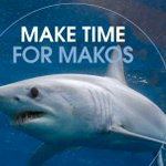 Image for the Tweet beginning: Makos are in trouble and