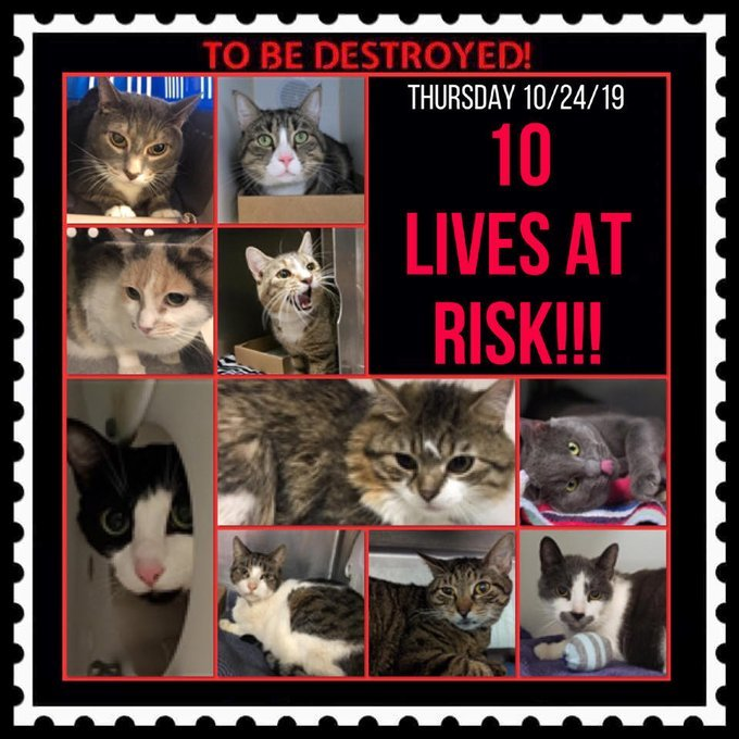facebook.com/ACC.OfficialAt… newhope.shelterbuddy.com/Animal/List (10) Sweet Souls SAM*SECOND CHANCE* FRED MERTZ*SECOND CHANCE* AVERY DAISY STORMI AUTOBOT NAOKI PERCY CHICHI DIAMOND TBD 10/24/19 Adopt/Foster/Pledge Please RT Killing starts at12PM #NYC Fostering/Vet>FREE nycacc.org/get-involved/n…
