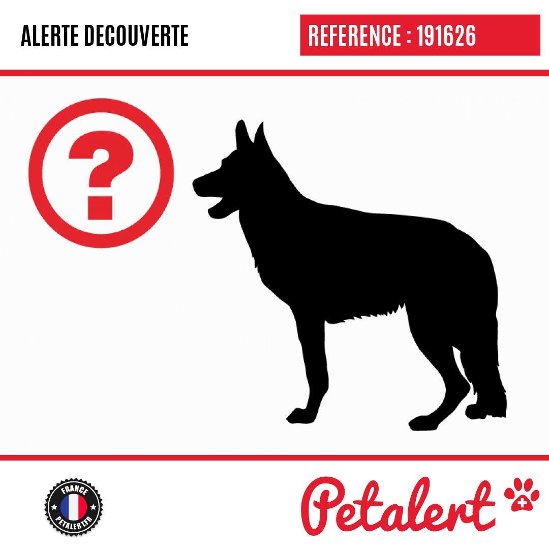 Trouvé #Chien #HautesPyrenees #Soues #Petalert  #PetAlert65 / http://p3t.co/E34MApic.twitter.com/k9JXYGQj0f