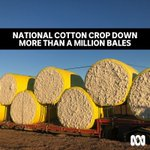Image for the Tweet beginning: National cotton crop down more