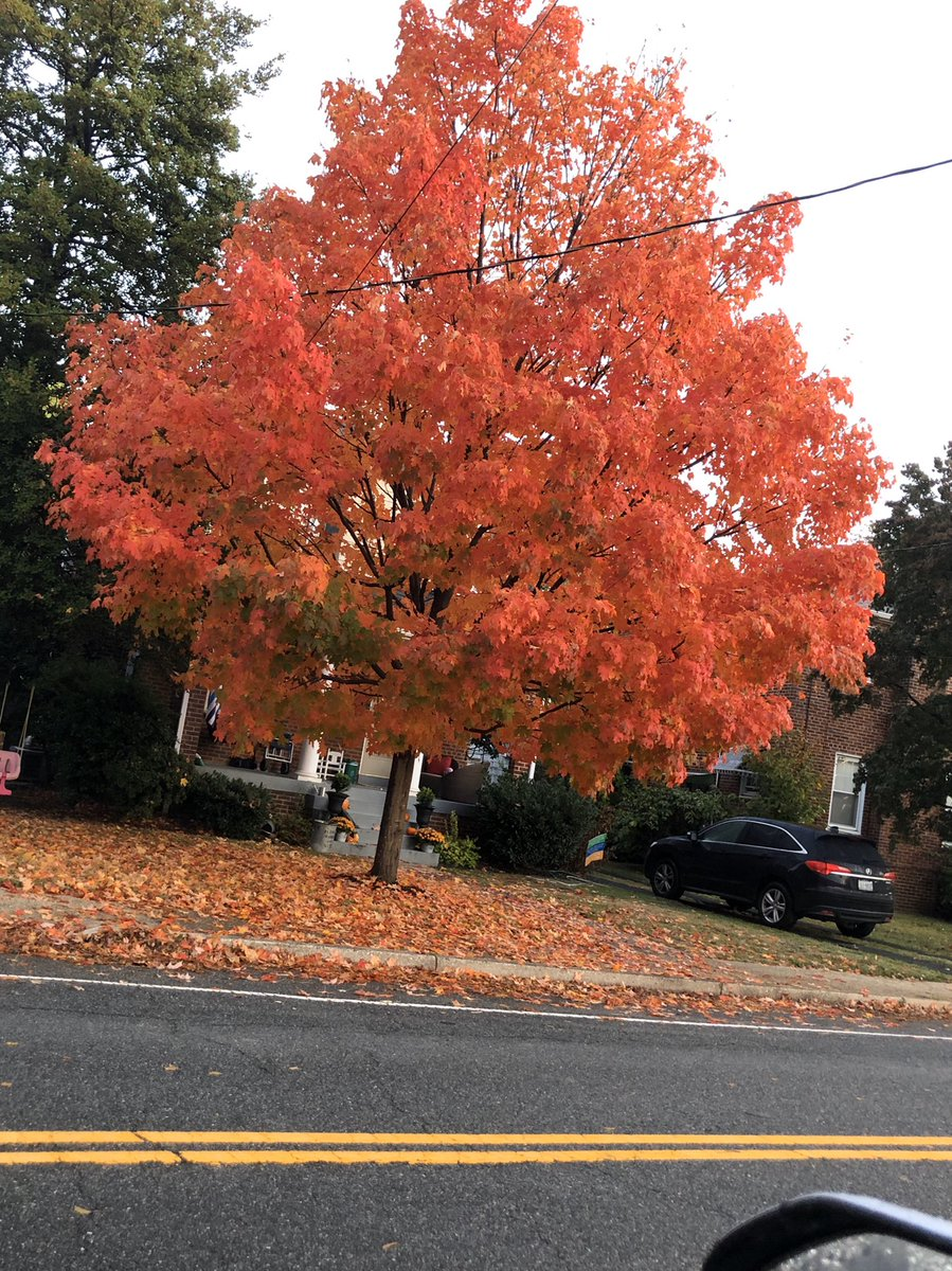 We love our new building, <a target='_blank' href='http://twitter.com/APS_FleetES'>@APS_FleetES</a> , but there are some things that we miss in our old building. This is one of them - the beautiful maple tree across from our room on south 7th street! <a target='_blank' href='http://twitter.com/MsEnglishGifted'>@MsEnglishGifted</a> <a target='_blank' href='https://t.co/he1sPSM1pI'>https://t.co/he1sPSM1pI</a>