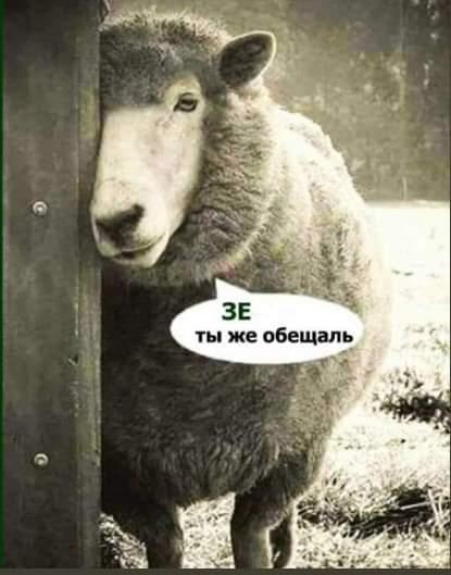 Украинцы могут временно потерять право на субсидию, продав землю за значительную сумму, - Гончарук - Цензор.НЕТ 9810