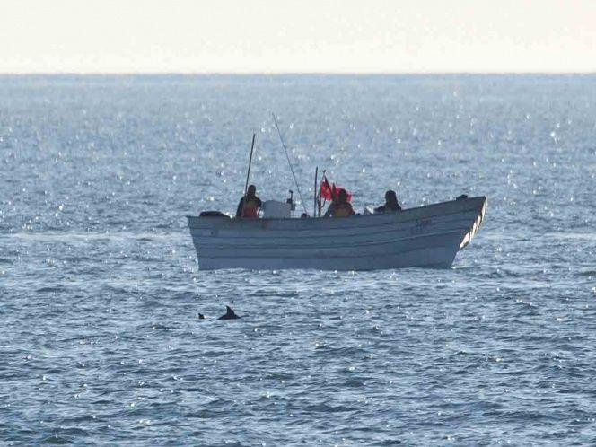 Vaquita marina pesca