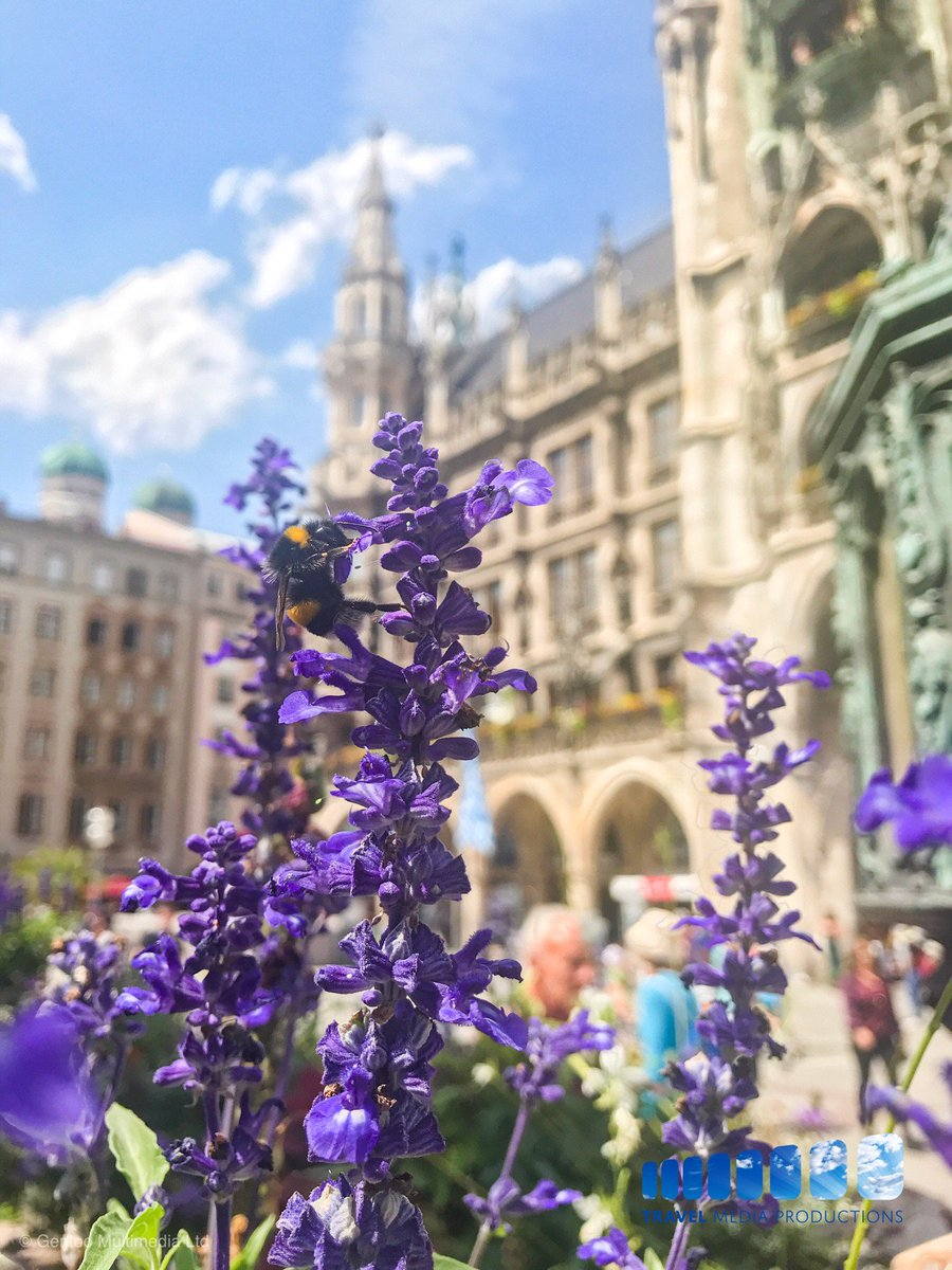 Flowers on Marienplatz in Munich, Germany •  • • • • #bayern #munich #bavaria #munchen #deinbayern #visitbavaria #oktoberfest #wiesn #travelling #münchen #traveler #minga #tourism #089 #travelingram #igersmunich #dirndl #igtravel #munichstagram #europe #traveller #mucpic.twitter.com/ib5gGlKAMe
