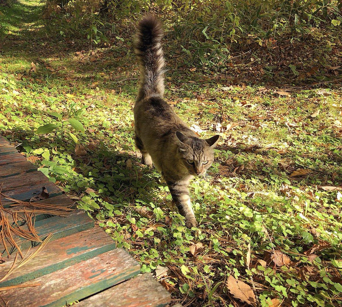 とても忙しかった一週間。お庭のベンチでぼへーーとひと休みしていると、相席しにやって来る猫たち。2匹と1人でぼへーーーー。。