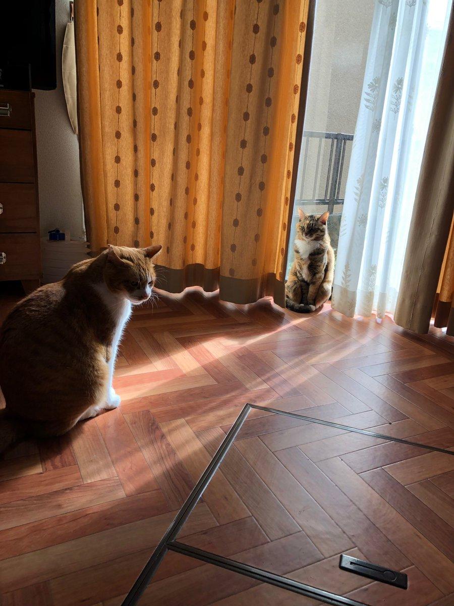 猫の子よ…汝、悔い改めよ…少しダイエットせよ…おい、こっちを見ろ…汝、こら汝…