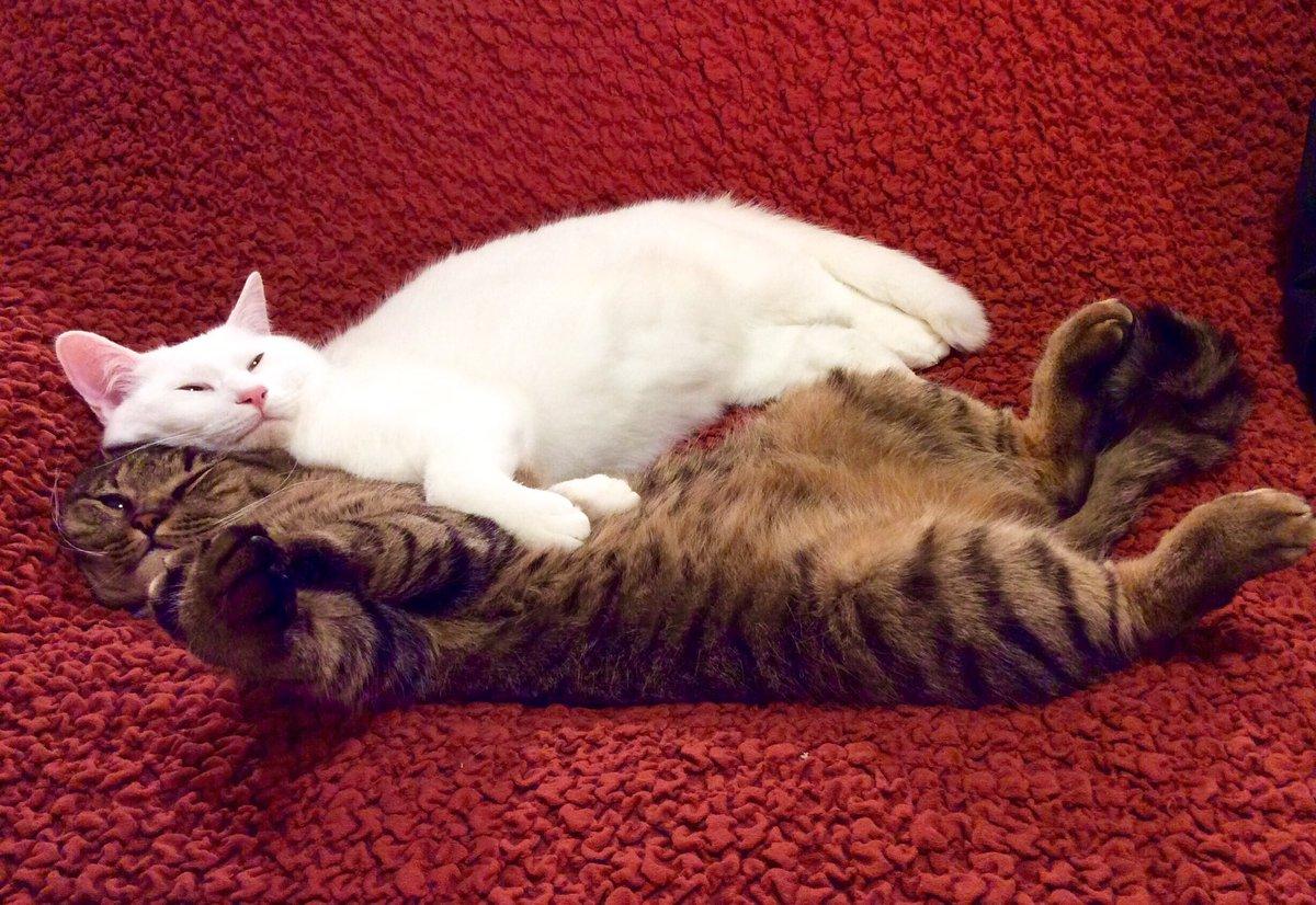テレビつけたら芸能人がペットショップ猫飼う番組してた。何十万という値札がついた猫。もちろんその猫ちゃんは可愛い。でも、値札がついてない猫だって可愛いよ!!猫を飼う選択肢の一つに保護猫がある。そのこと忘れないでほしいな。