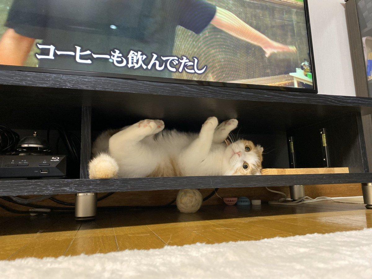 テレビ台の下に葬られたオモチャがこんなにあるとは……