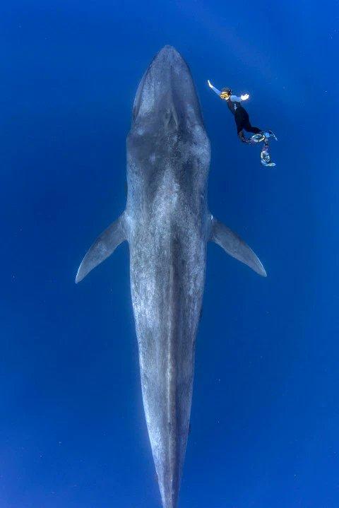 Blue Whale Vagina