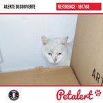 Image for the Tweet beginning: Trouvé #Chat #CharenteMaritime #LaRochelle #Petalert