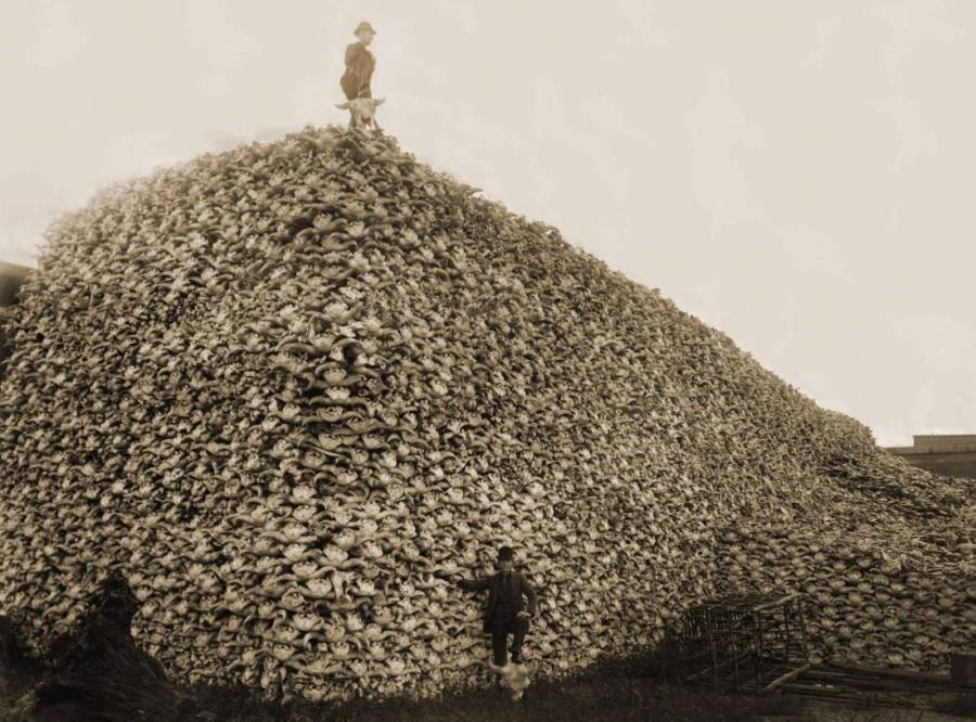Just one of the facts that was (shamefully) new to me in reading Lakota America was the US governments strategy of eradicating the bison to attack Native American sovereignty. @PortfolioCarmel just shared this horrifying mid-1870s photo