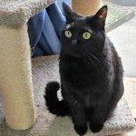 丸洗いされた後の猫「猫なのに丸洗いされた・・・」