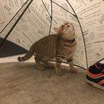 まるで映画のワンシーン!雨宿りする猫ちゃんが可愛すぎる件