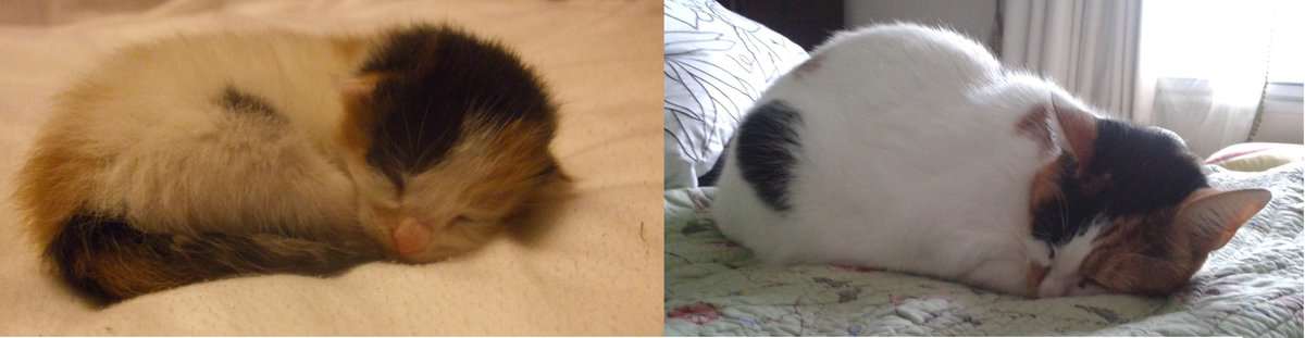 Still doing my favourite things #mypetin5words (Alice 2012 & 2019)