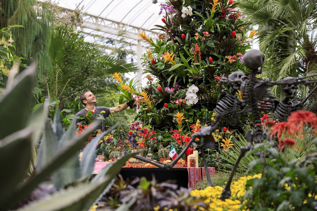 Visit the Glasshouse to see an eye-catching new display inspired by the Mexican Day of the Dead festival, featuring tropical plants and skeletons! On from 26 October to 17 November: rhs.org.uk/gardens/wisley…