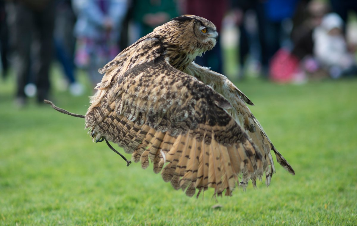 Watch enthralling birds of prey presentations here at Wisley this weekend and get to meet the wonderful birds up close. See them take flight at 11am and 2pm on Saturday and Sunday rhs.org.uk/gardens/wisley…