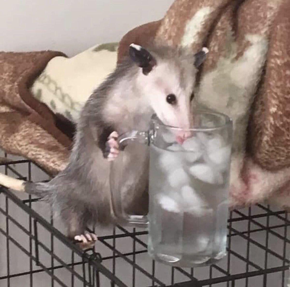 Possum Every Hour (@PossumEveryHour) on Twitter photo 26/10/2019 05:43:56