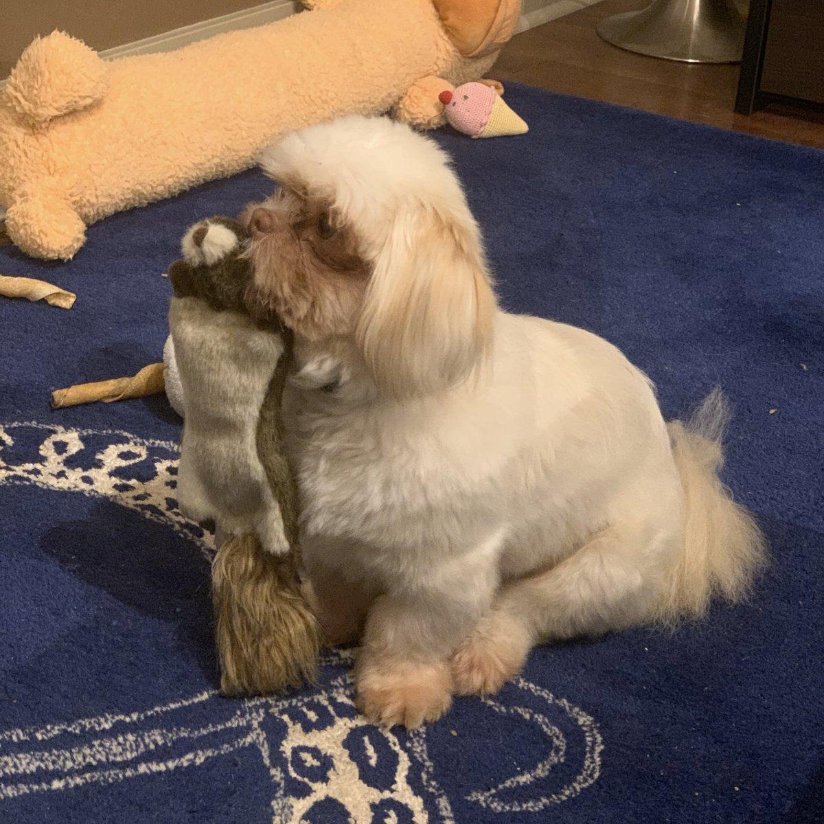 @jmfinn Simba is offering her his favorite crinkly squirrel.