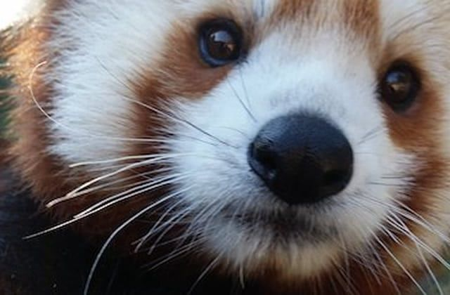 Bonjour ♥  Voici la photo trop choupinette du samedi ♥♥ Belle journée.  #pictureoftheday #picoftheday #animal #animauxmignons #animaux #pixabay
