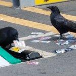 名古屋ではよくある光景?遊戯王で遊んでるカラスが発見される!