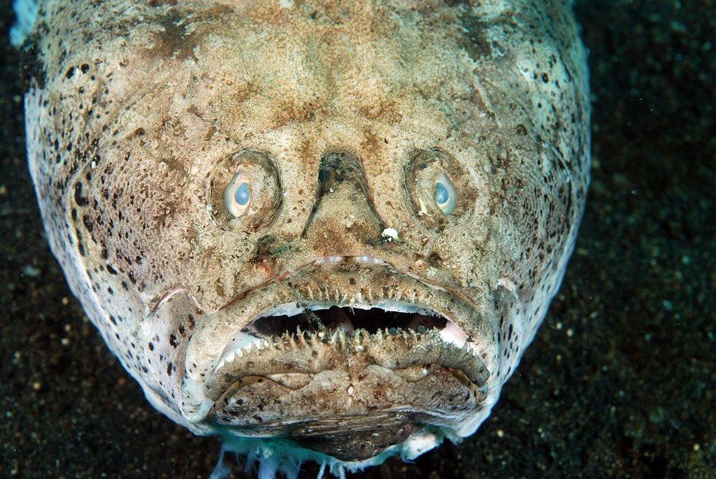 слову, свободно обитатели глубин океана фото мех получают шкурки
