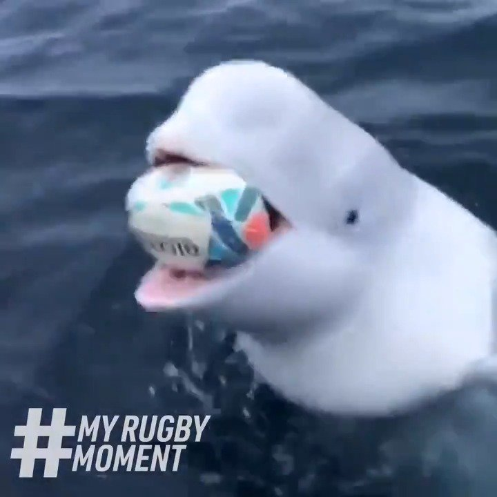 When we say rugby is a game for all, we mean it 🐳 #MyRugbyMoment