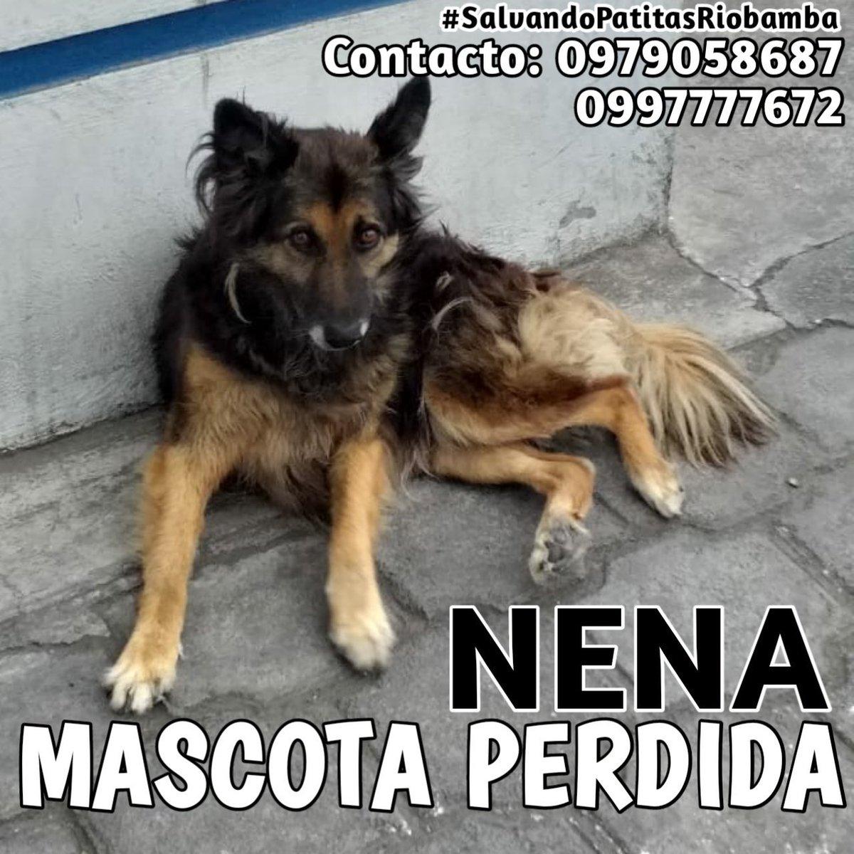 denisCORVUS Riobamba