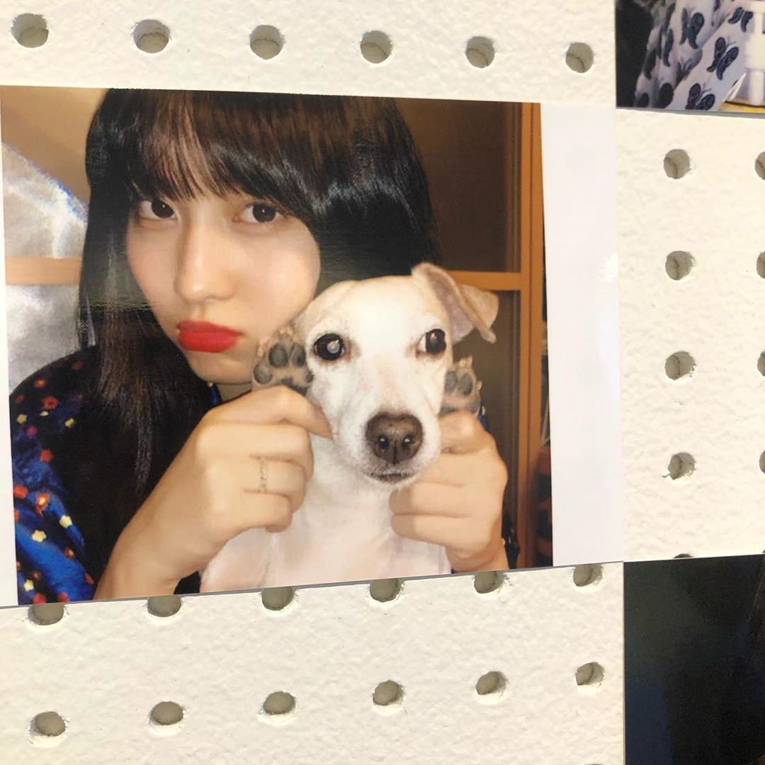 Momo with her adorable Pudding  #HappyMOMOday  #DancingMachineMomo  #OurLovelyMomoDay<br>http://pic.twitter.com/FiETmTqZAU