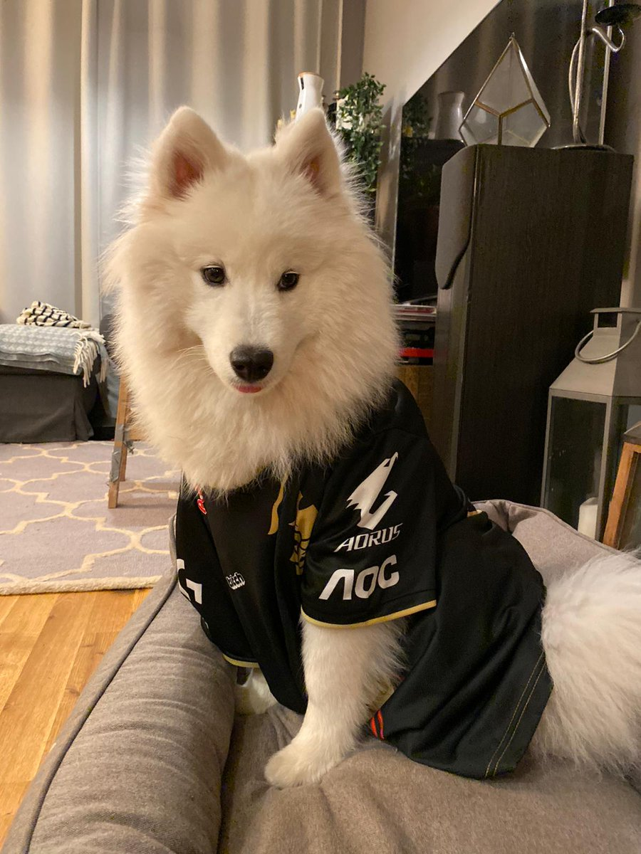 My Doggo Appa isnt able to travel to Paris to enjoy the finals. So we wanted to make sure the world knew who she wanted to win. @G2esports #Worlds2019 #g2grandslam For more Doggo photos check her Instagram. instagram.com/appathecloud?i…