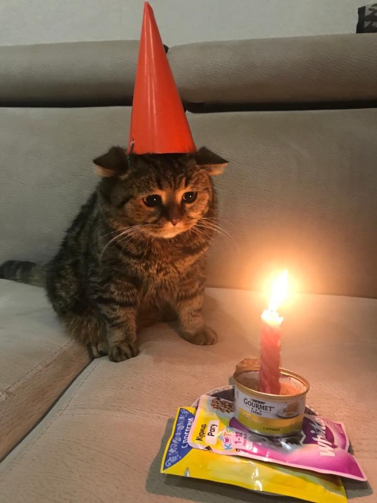 дыни пахучее открытка день рождения грустный праздник которая была