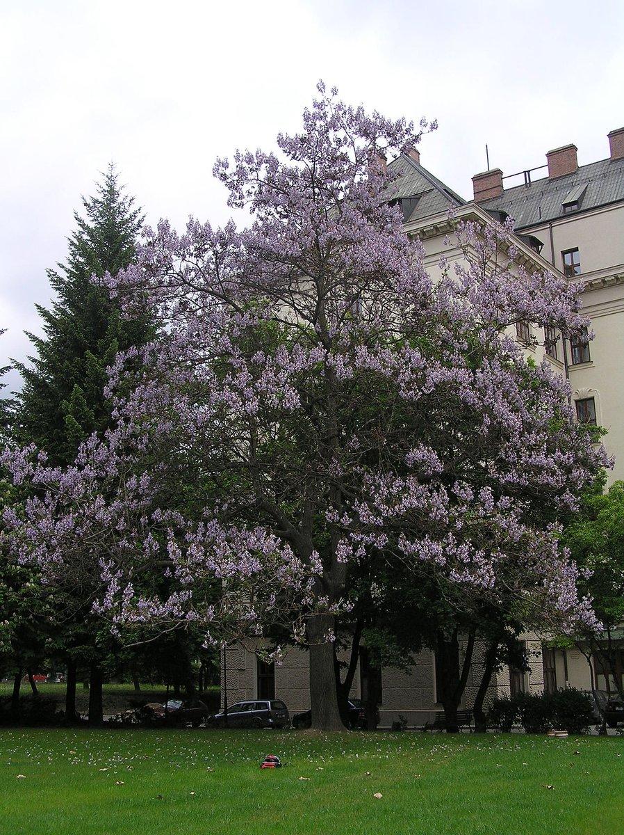 شجرة الأميره EI3tQc9WsAERCQr