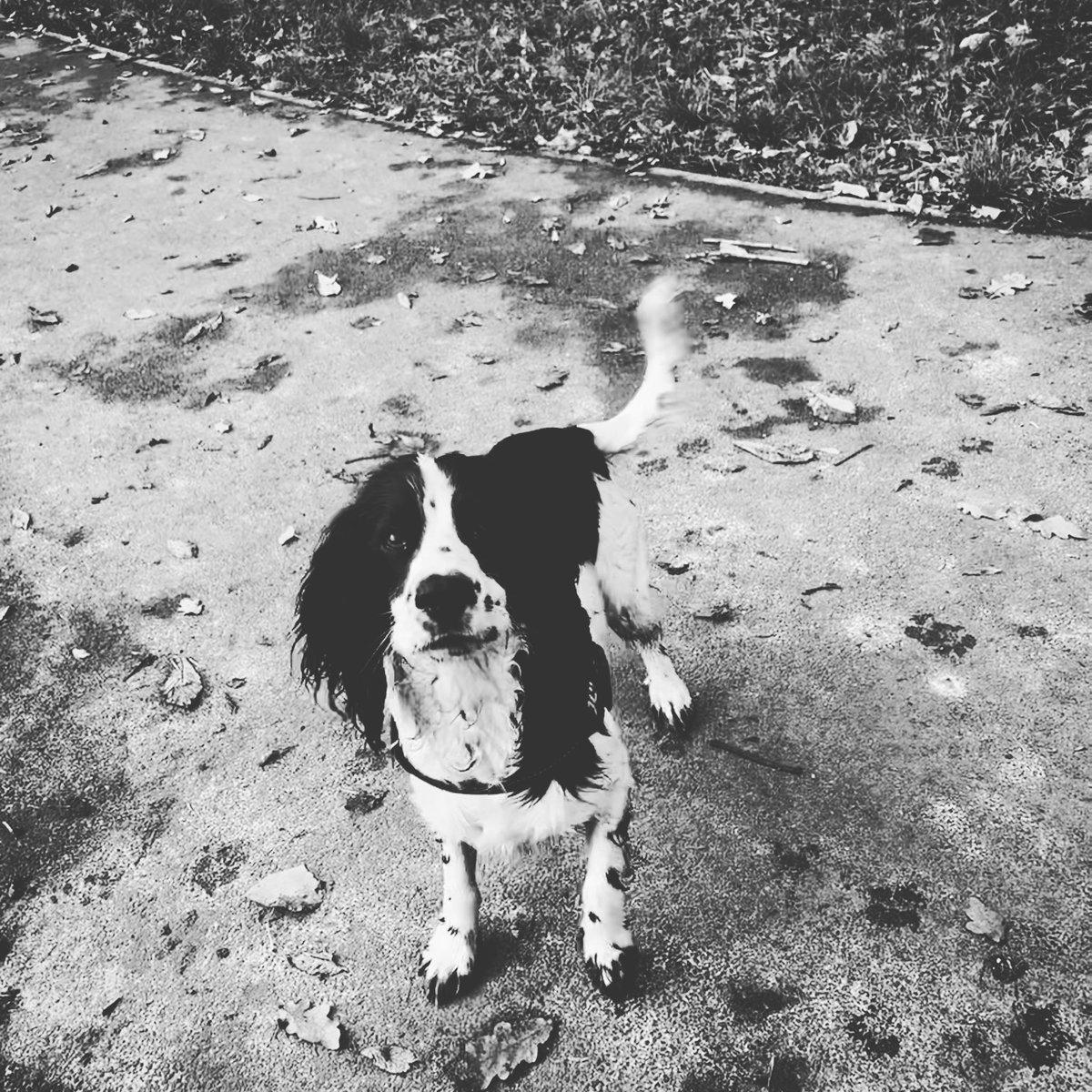 My dog Ringo 🍁